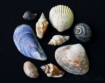 Beach Decor, Still Life Photography, Nautical Photograph, Seashells Photo, Ocean Print, Minimalist, Natural History, Sea Picture, Coastal