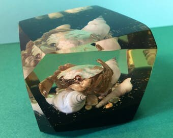 Vintage Lucite Paperweight - Crab In Resin - Vintage Resin Paperweight - Vintage Sealife - Decorative Trinket - Crab - Shells - 1970s Decor