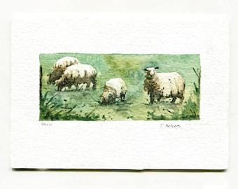 Sheep Original Watercolor Art Card For Sale