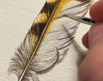 a short analysis of the evolution of feathers Summary the origin of birds has always been a major problem for darwinism,   a literature review on the evolution of bird feathers showed that even though.