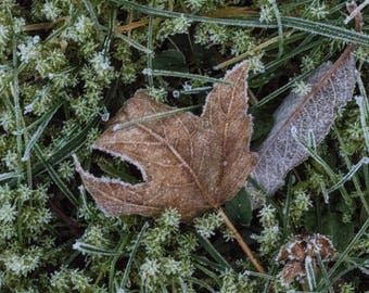 Gallery Wrap of Frosty Leaf 24 x 36