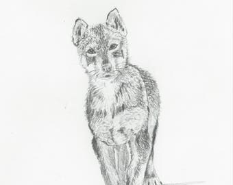 "Print of Original Drawing ""Puppy"" by Sarah Marie Bevard Dogsled Art Dogsledding Alaska"