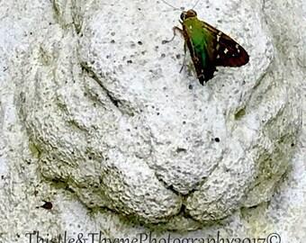 Rabbit Statue Magnet 4-3/4x3-1/8 - Stone Rabbit statue with Flicker Moth