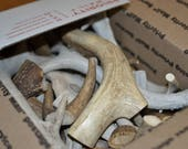 Antlers Natural shed deer antlers FULL Medium Flat Rate Box for carving slice buttons knife handles jewelry crafts of any sort Dog Chews
