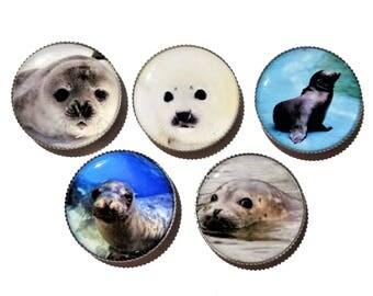 seals, sea lions bottle cap magnets