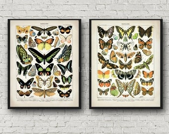 Summer Sale Colorful Butterflies and Moths Set 2 Poster Print Set Late 1800s Repro Photo Paper 8x10 to 30x40 Larousse