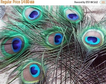 Etsy On Sale Peacock Feathers, Six  2.5in All Seeing Eye Feathers, and a couple extra feathers, 6ish tot, Weddings, Prom, Center Pieces, Cor