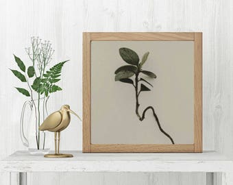 Plant photography | printable art | nature art print | macro photography | rustic home decor | minimalist botanical | modern country home