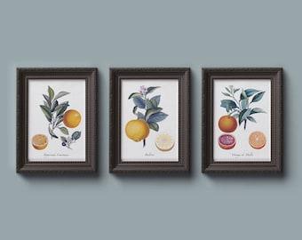 CITRUS set of 3 botanical images, Instant Download Digital Downloads, botanical print for home, lemon orange fruit clipart set no.031
