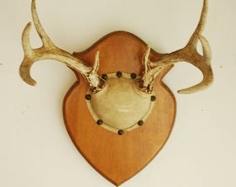 Real Vintage Deer Antler Mount - Taxidermy 8 Point Wood Whitetail Wall Decor Decoration Collectable Gallery Living Room Nursery Rack Boho