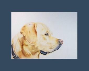 Golden Labrador A4 Print