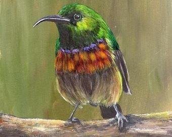 SALE Bird Painting Art Sunbird SFA Wall Art Wildlife Original hand painted bird acrylic painting  Australian Artist Janet M Graham
