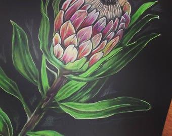 Botanical Ilustration