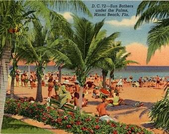 Miami Beach Florida Sun Bathers under Palms Vintage Postcard 1957
