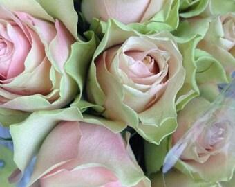 Pink white green rose seeds,182,roses seeds, roses from seeds,growing roses from seeds,seeds for roses,gardening