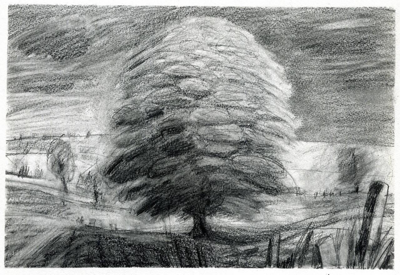 high summer tree tree drawing fine art pencil drawing