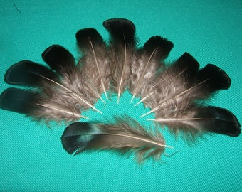 "10 ""Back"" PHEASANT feathers blue natural 5-8 cm height"