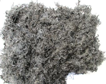 Pure Gotland lambs wool, one whole raw fleece, 1.2 kg, spin, felt, decorate, springy curly fibres, dark grey, heritage breed wool, no 31
