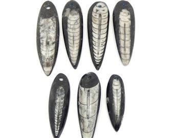 10% off July 4th Orthoceras Teardrop Fossil Drop Bead - Top Drilled Bead (RK2B17-09)