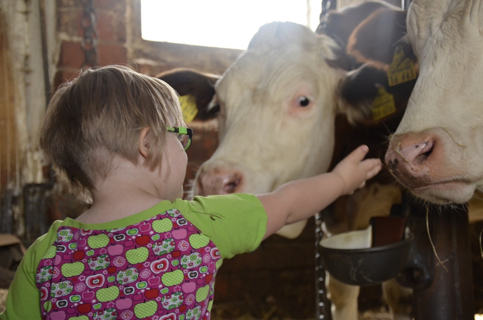 child, learning, farm, animals, outdoors, exploration