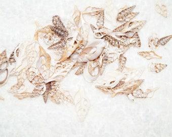 Mixed Cut Sliced Seashells, Cut Seashells, Pink Murex, Craft Seashells, Sliced Seashells, Mixed Sliced Seashells, Sliced Shell, Mixed Shells
