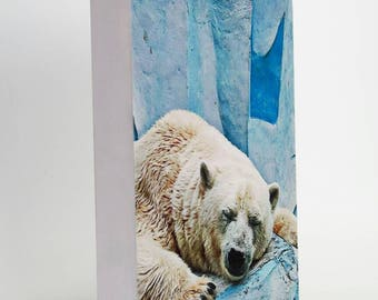 Happy Polar Bear DecoFrame. Wall Art Anyday Gift
