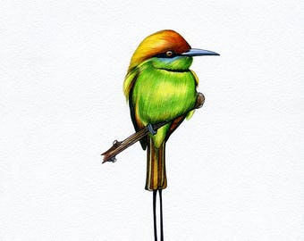 NEW PRINT! Bee-eater, Bird, Print of Original Watercolor Painting