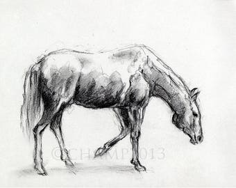 Study of animals - horse walk