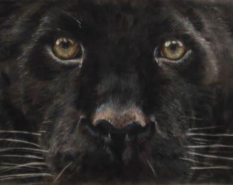 Puma - Limited Edition Mounted A3 print of beautiful puma's head