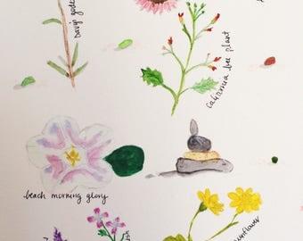 California Flowers PDF watercolors