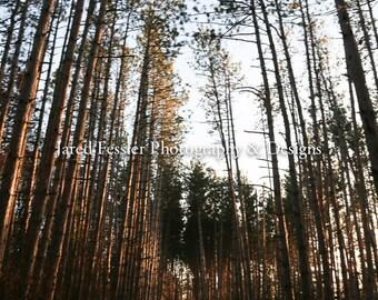 Woods Trail