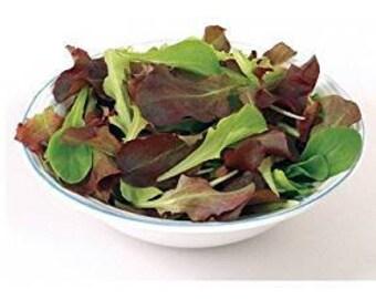 David's Garden Seeds Five Star Greenhouse Mix Lettuce