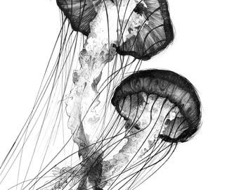 Black and White Drawing Print – Jellyfish