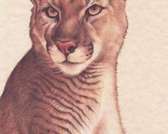 Original drawing of a puma - Puma drawing made colored pencils