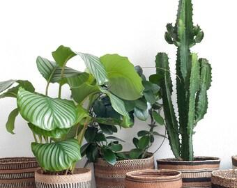 Fine weave sisal baskets size: M