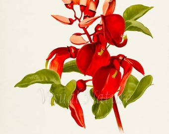 Coral Tree Flower Art Print, Botanical Art Print, Flower Wall Art, Flower Print, Floral Print, red flower, Flame Tree