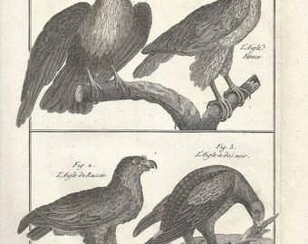 1790 Fine Antique ORIGINAL Print, 227 Years Old Engraving, Eagles, Ornithology