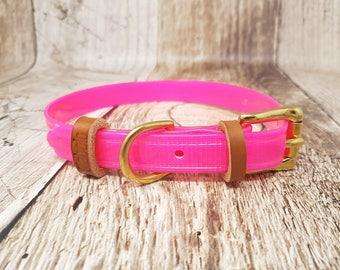 Waterproof Biothane Classic Buckle Dog Collar