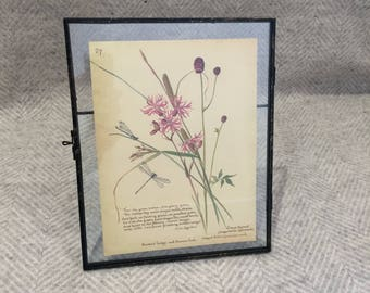 Genuine vintage framed botanical drawing, flower illustrations, botanical print, floral, in glass frame, dragonfly pink nature