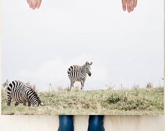 Wall art// Zebra // Large photo print // Home decoration