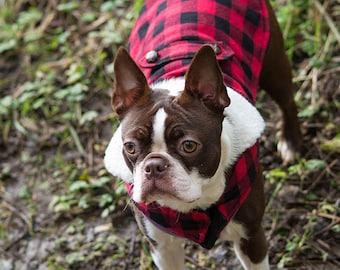Digital Photograph Boston Terrier in Mud (ID:009)
