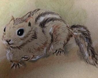 Squirrel Pastel Drawing