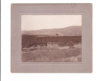 1910 Vintage Black and White Photo Fruit Tree Orchard Paonia, Colorado