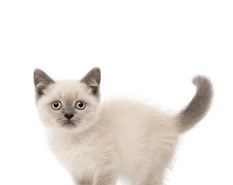 Siamese Kitten for Nursery, Quick Baby Shower Gift, Funny Little Kitten Print, Kitten for Baby, Kitten Baby Shower Gift,  Cute Kitten Print