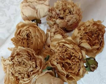 8 Dried Peonies on Stems Real Peonies, Air Dried Naturally Blush Pinky Beige Colour-Were Pink or White Originally