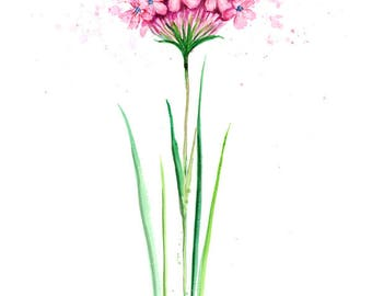 Watercolor Flower Print - Pink Alpine flowers