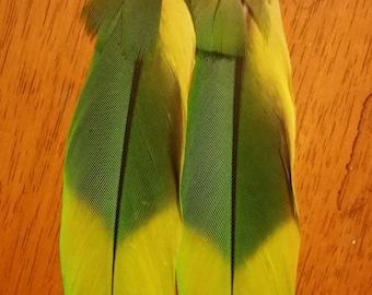 Amazon Parrot Feather Long Earrings