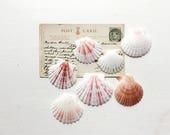 Pretty seashells pink and white small scallop shells coastal bathroom decor