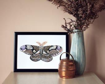 Hand drawn illustration of Wallich's Owl Moth - A4 Giclee Print