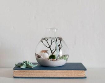 Marimo Moss Ball Terrarium, Marimo Terrarium,  Marimo Terrarium Kit, DIY Terrarium Kit, Gift for Him, Boyfriend Gift, Aquatic Decor, Boho